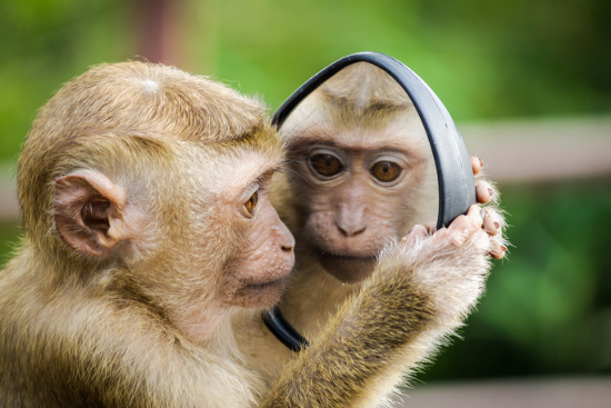 Monkey looking into a mirror