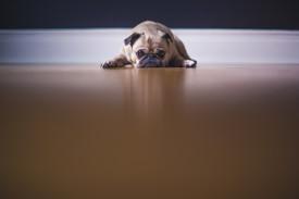 A quiet dog